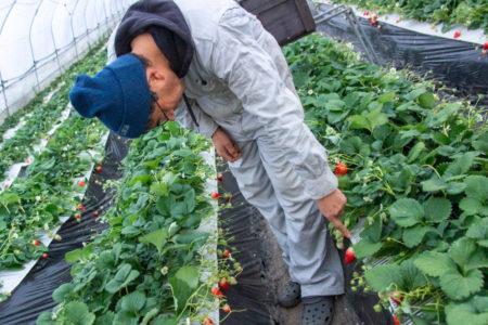 ファームオアシスは生態系と共存し土をつくる「循環型農業」に取り組んでいる